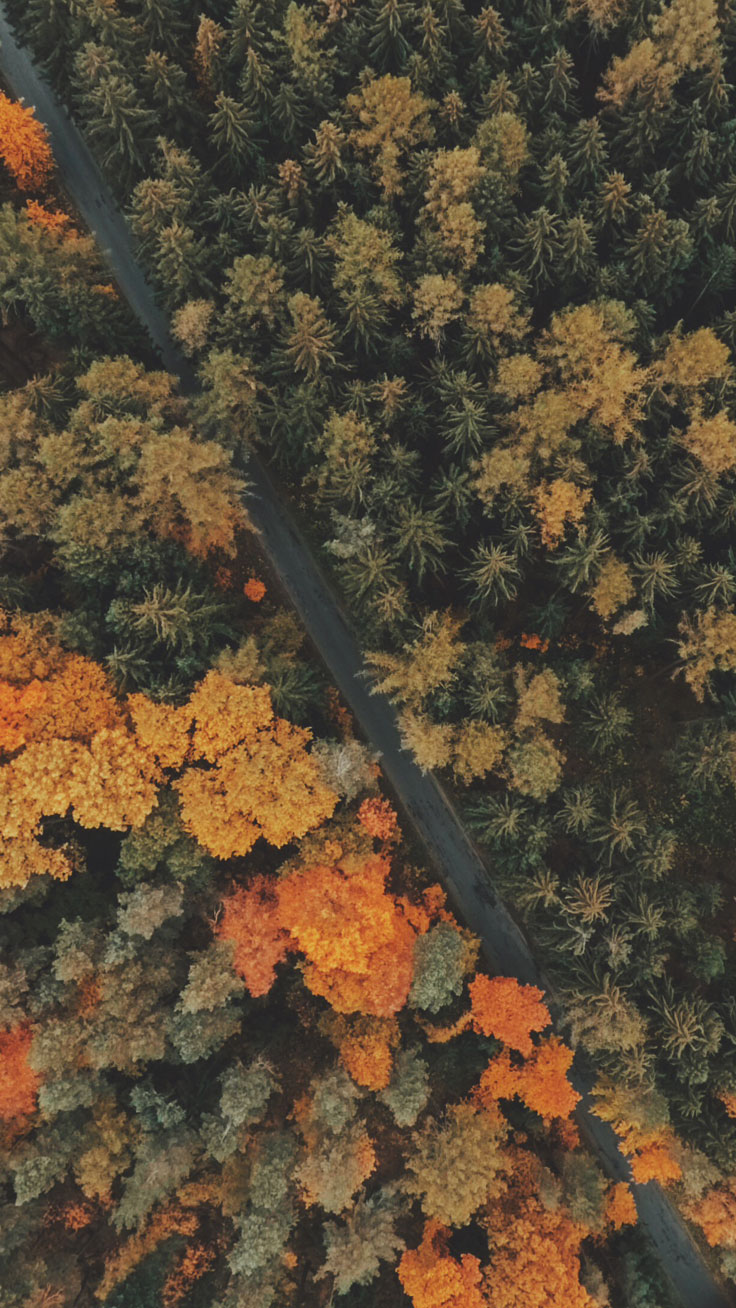 Amazing Fall Wallpaper For Iphone - fall-road-iphone-wallpaper  Gallery_342378.jpg