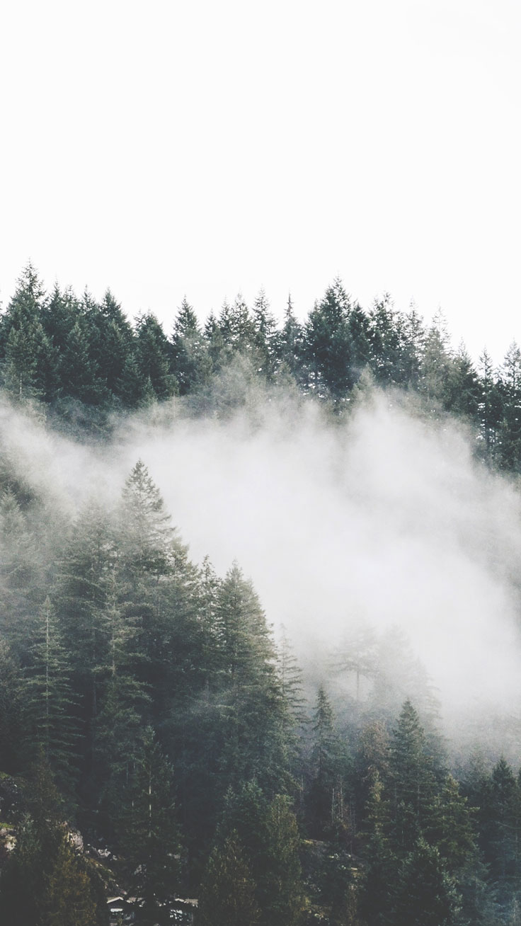 Simple Wallpaper Mountain Forest - mountain-mist  Perfect Image Reference_543897.jpg