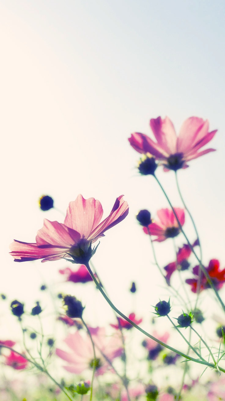 Flower iphone background flowers ideas for review - Flower wallpaper for phone ...