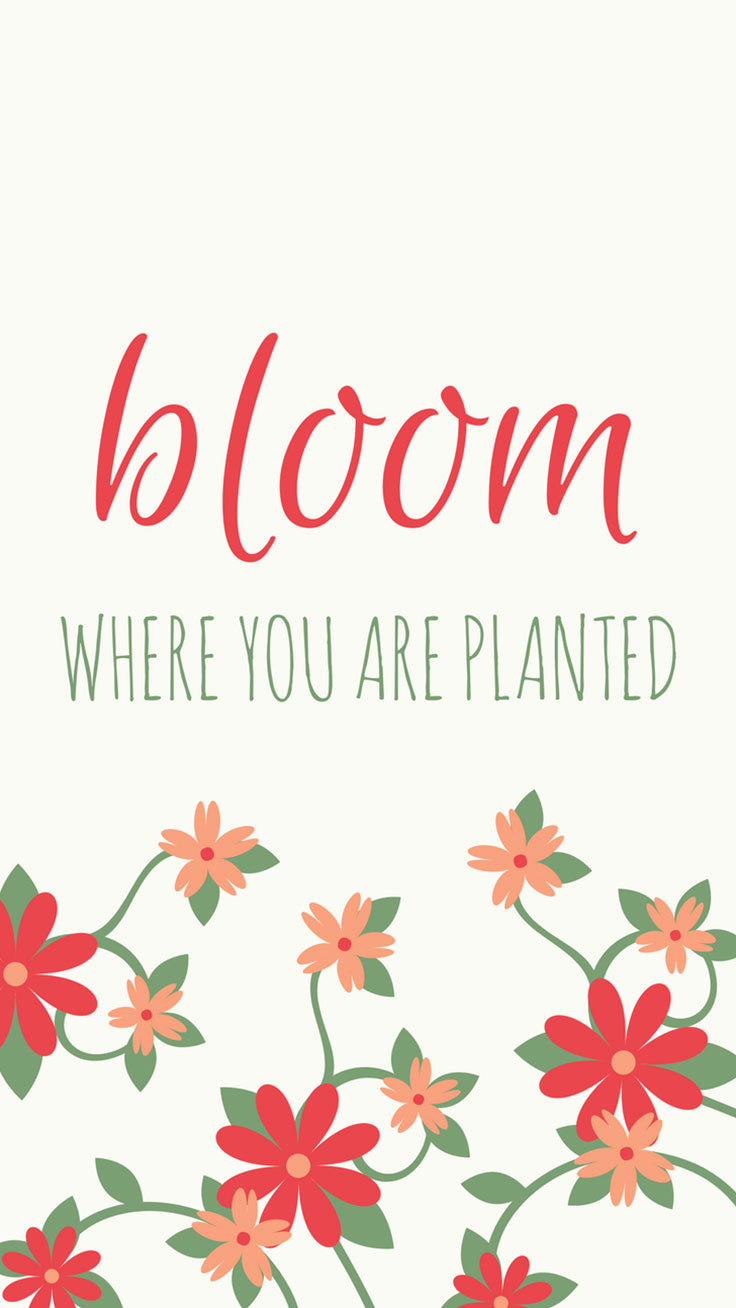 Bloom where you are planted Quote Floral iPhone 7 Plus Wallpaper / Tap to download for free!
