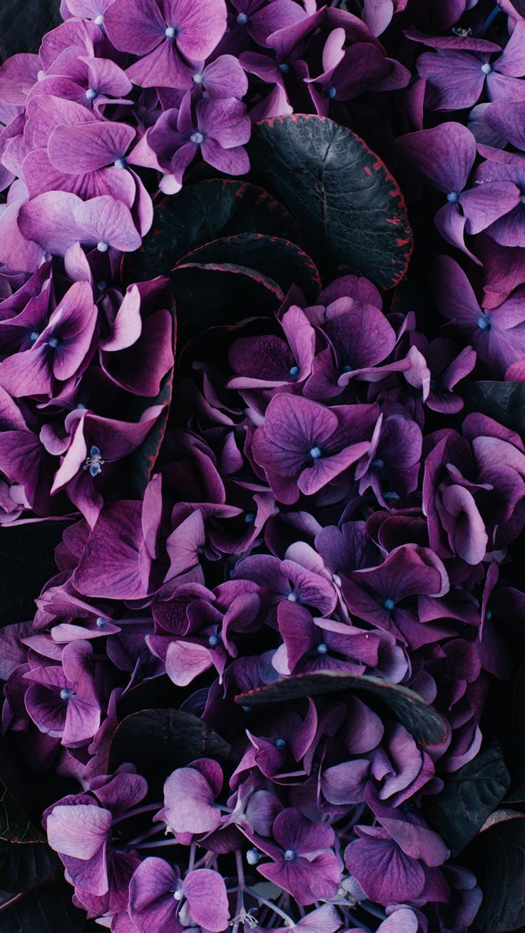 Purple flowers ★ Download more floral iPhone Wallpapers at preppywallpapers.com