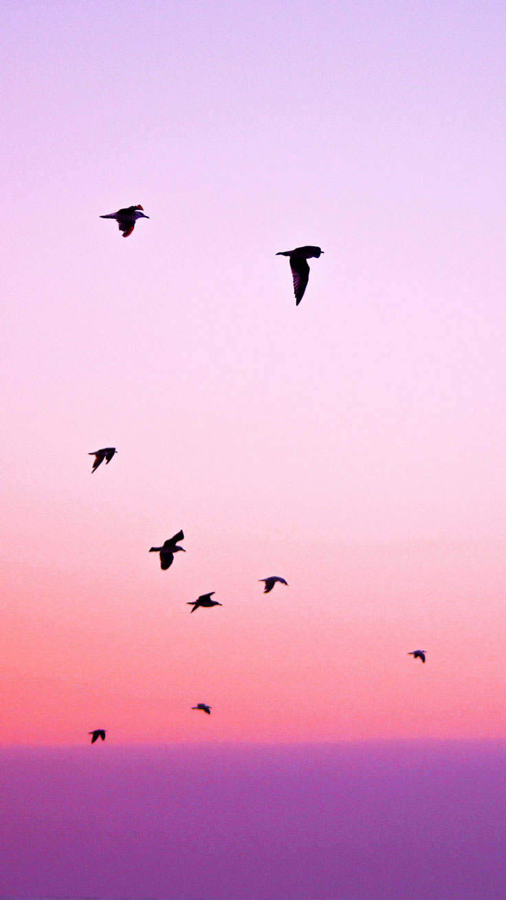 Preppy Original ★ Pink Birds iPhone Wallpaper