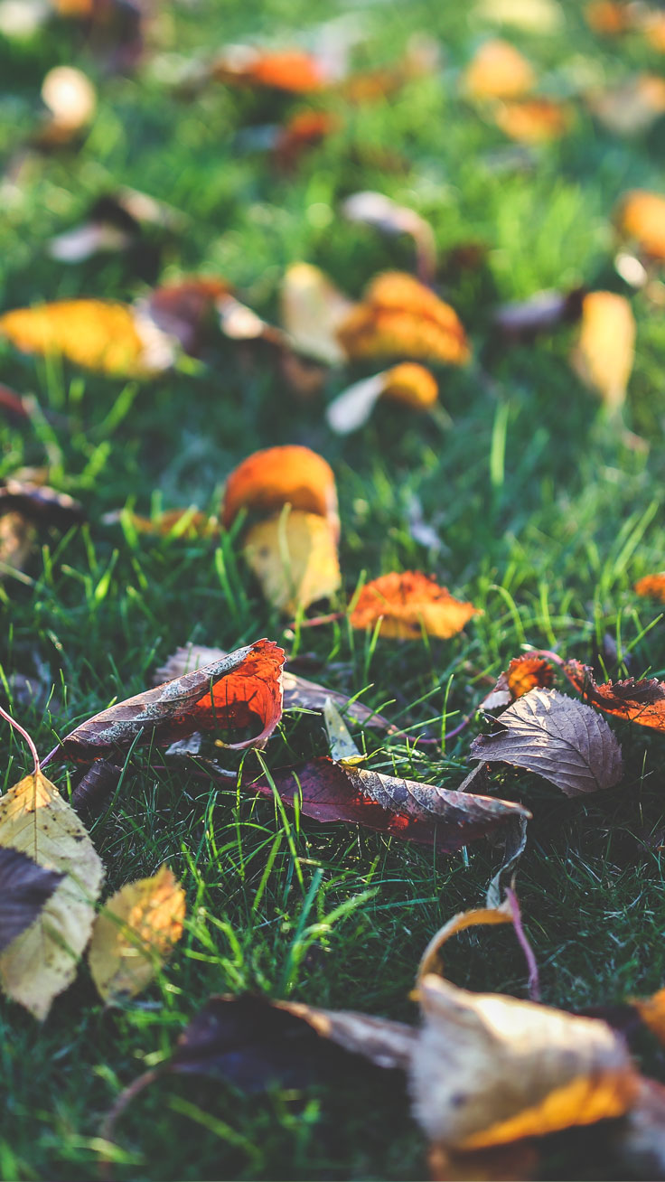 Free Autumn iPhone Wallpaper Collection ★ Download it at www.preppywallpapers.com